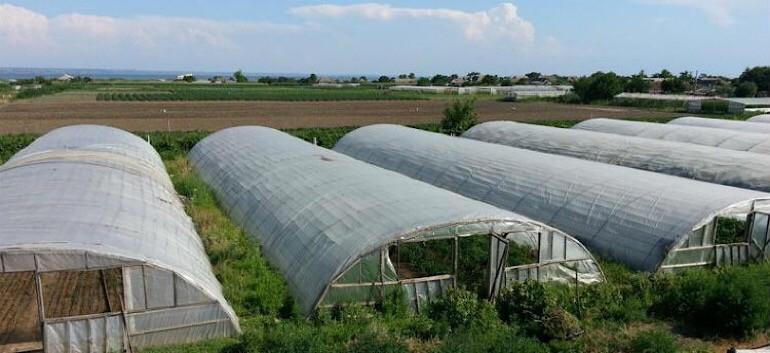 В теплице можно собирать 4 урожая в год